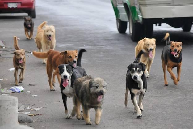 Pilas!! Restaurante de San Gil estaría vendiendo carne de perro