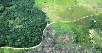 Deforestación, señal de alarma ambiental en la Amazonía