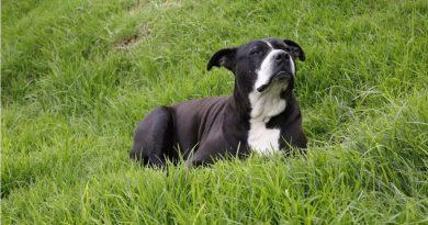 Suba realizará este sábado la primera adoptatón local de animales domésticos